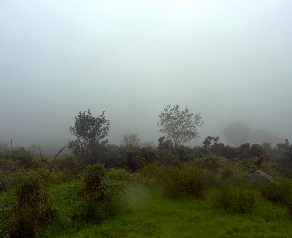DARTMOOR FOR PPT MIST
