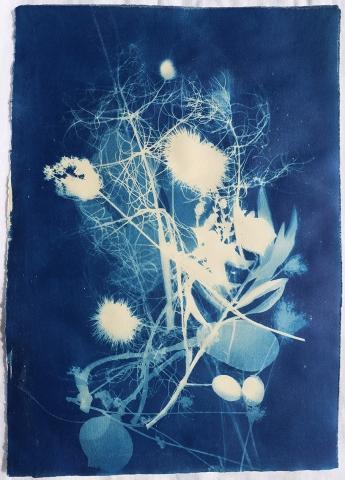 cyanotype plant ancient greece unique