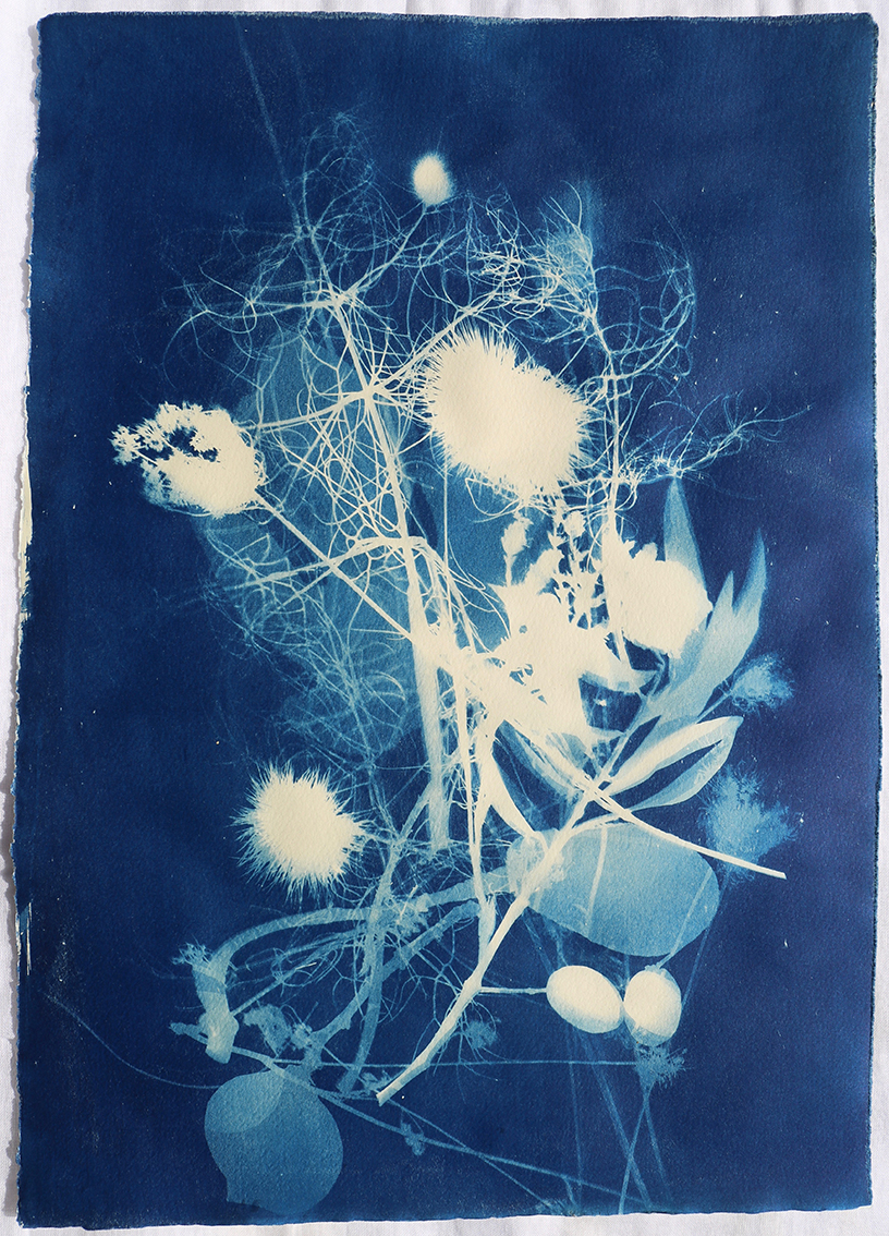 cyanotype plant ancient greece unique