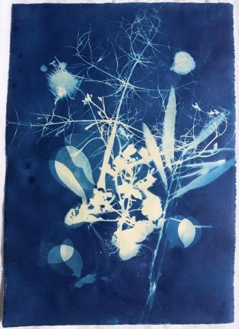 Sicily persephone shadow cyanotype nature plants