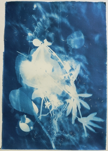 cyanotype sicily fruit nature
