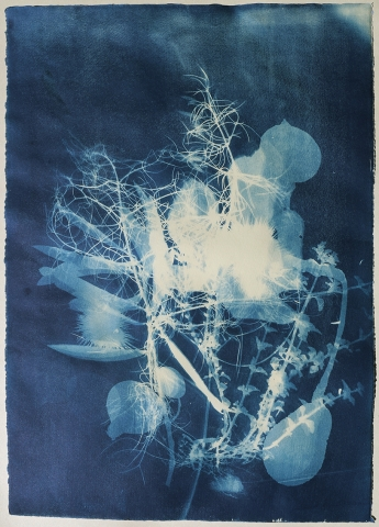 unique cyanotype nature sicily persephone