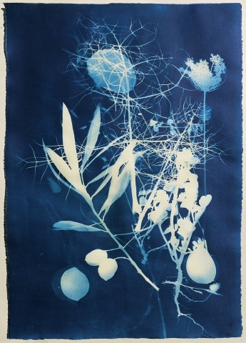 cyanotype plant nature ancient greece shadow language