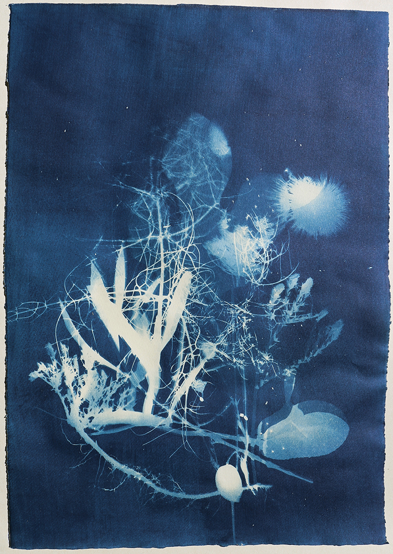cyanotype sicily plants nature